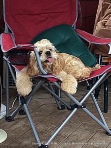 Thaddeus in the camp chair