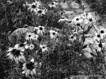 Full Black & White