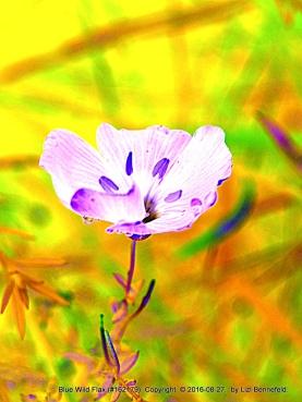 Violet (color)
