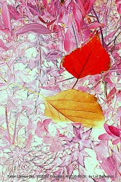fallen leaves (red)